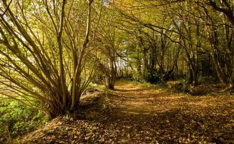 Reydon Wood