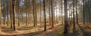 Dunwich Forest_516-7-8-9
