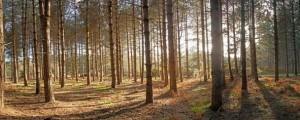 Dunwich Forest_516-7-8-9